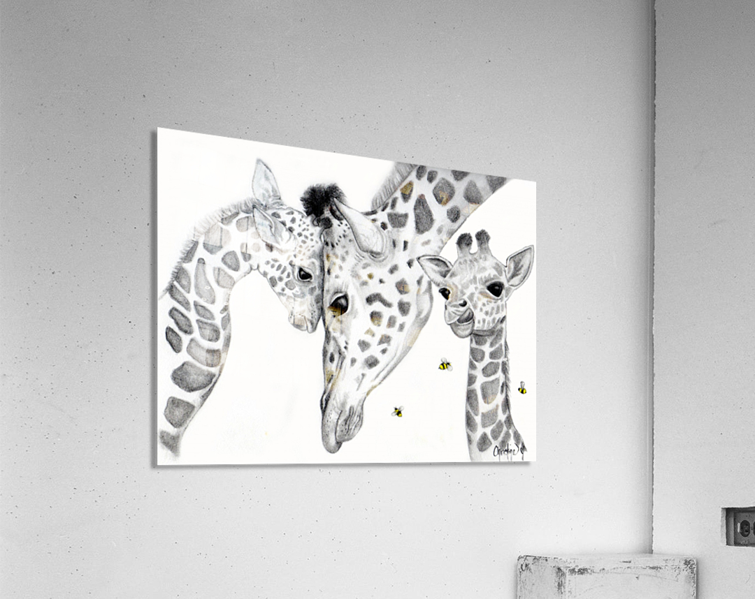 Giraffe Family   Acrylic Print