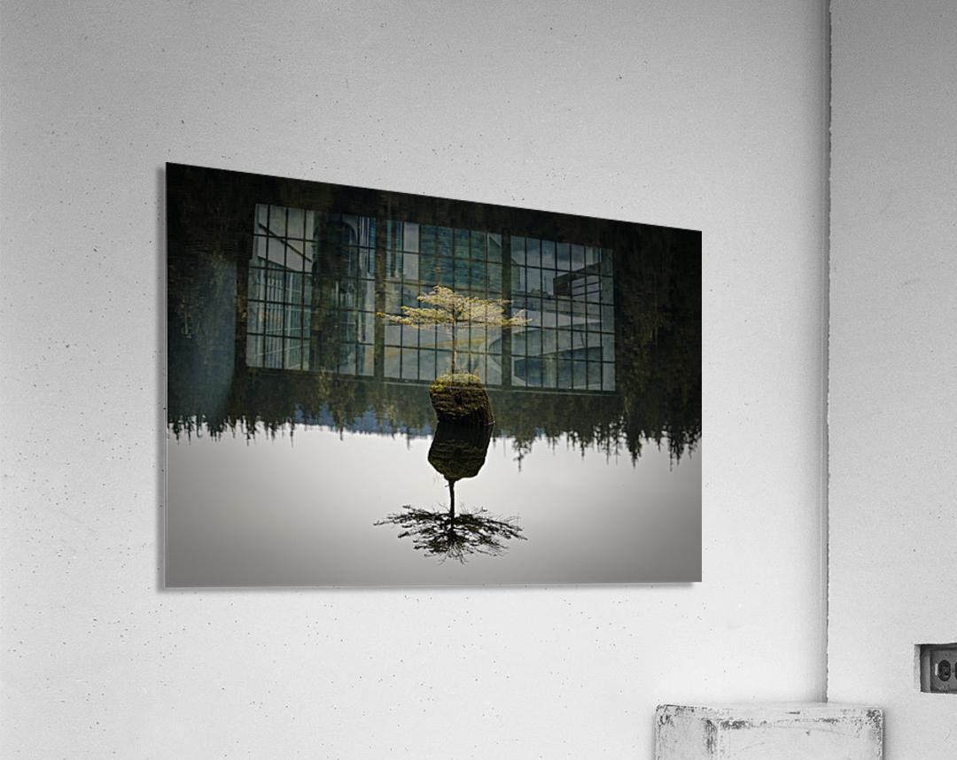 Reflection on a Bonsai Tree  Acrylic Print