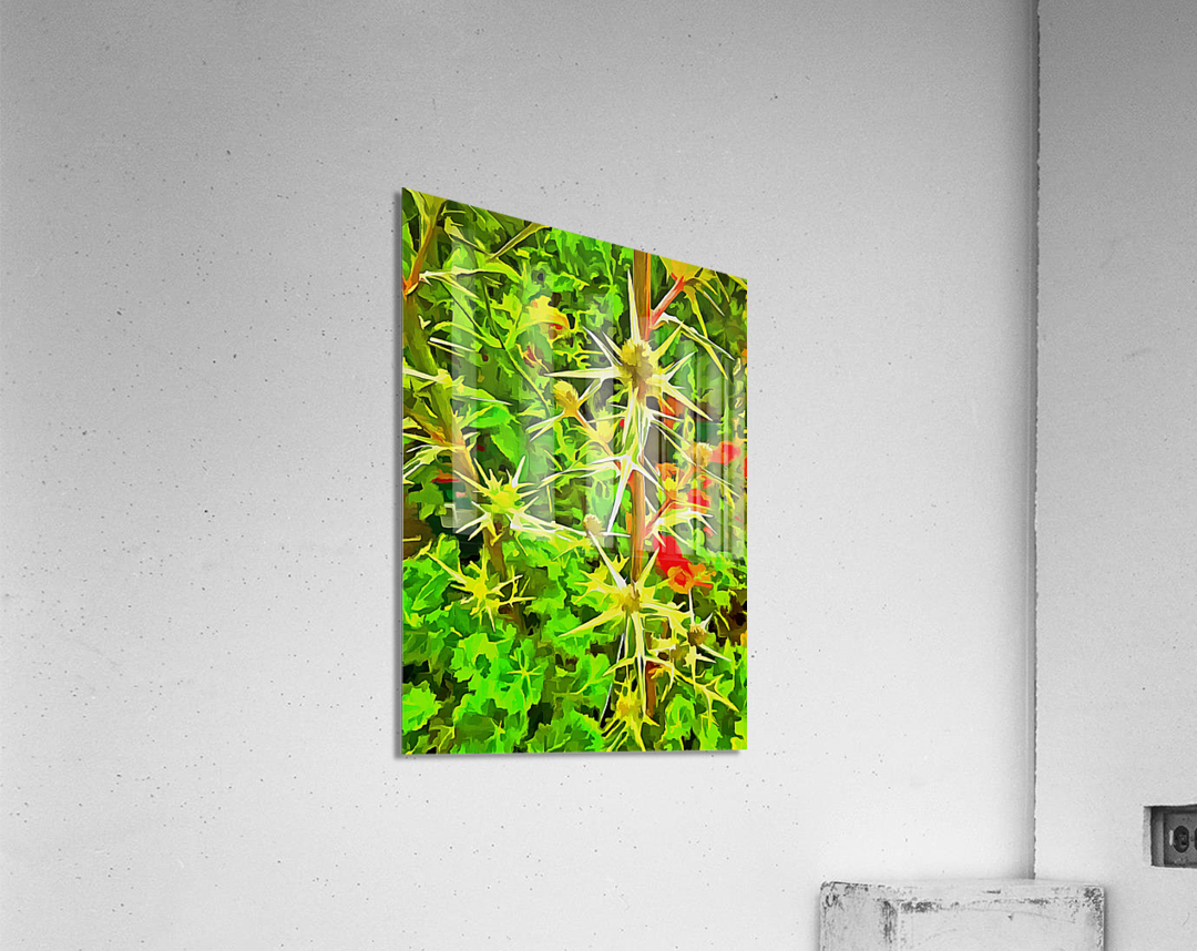 Eryngium Pop Art Style  Acrylic Print