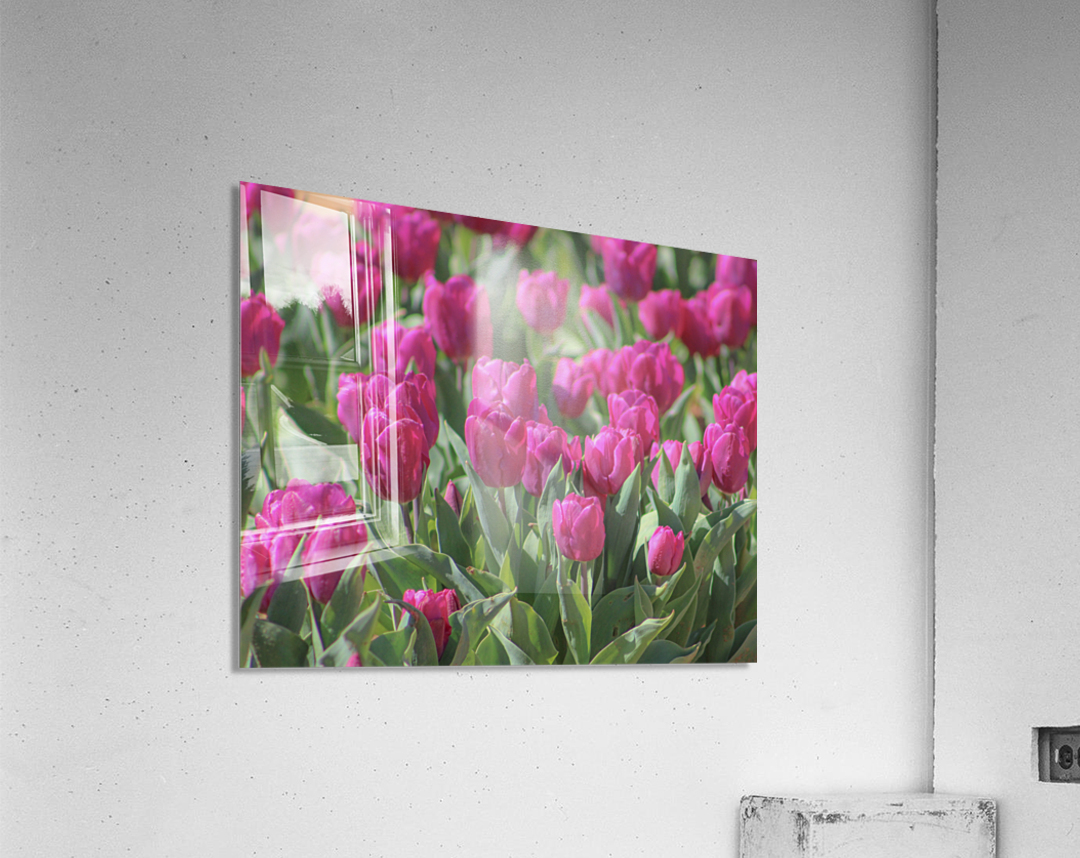 Fantasically Fuschia Tulips  Acrylic Print