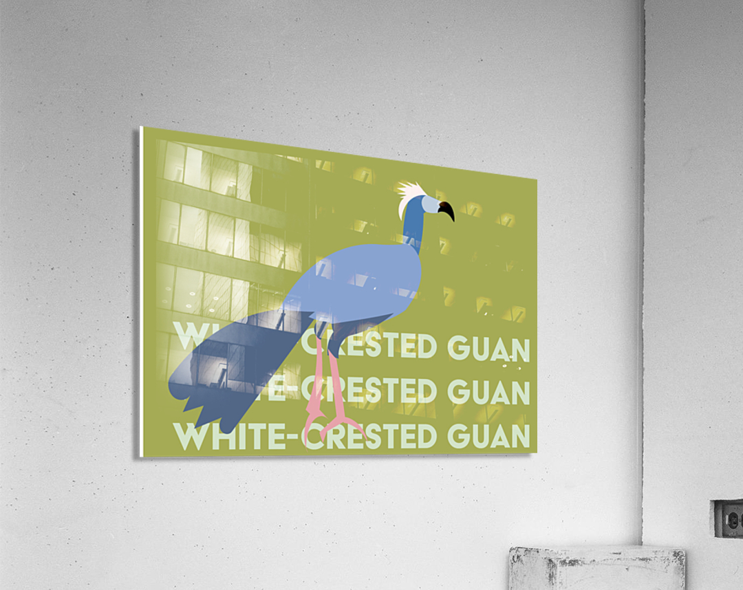 White-Crested Guan  Acrylic Print