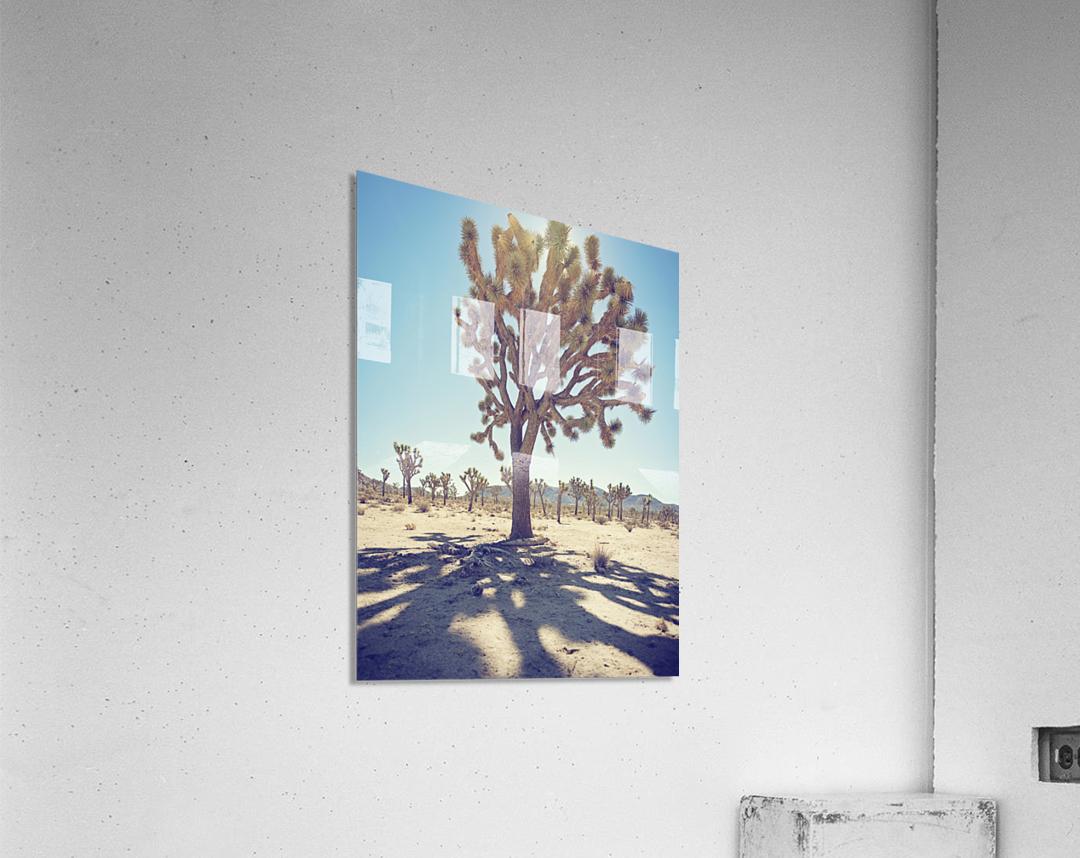 Joshua Tree National Park  Acrylic Print