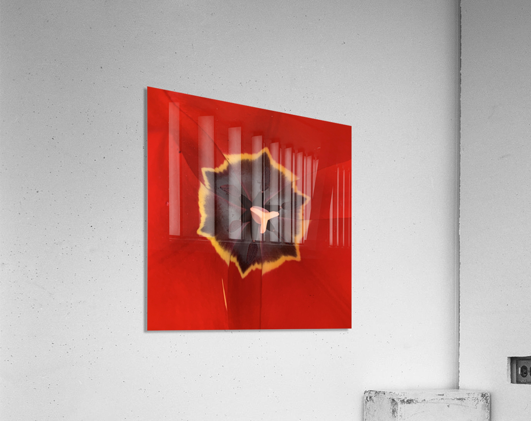 Treasured Tulip  Acrylic Print