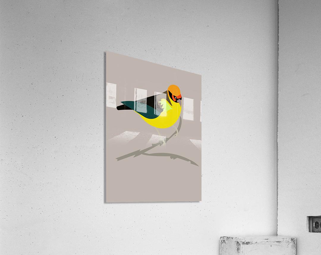 Black Eared Tanager  Acrylic Print