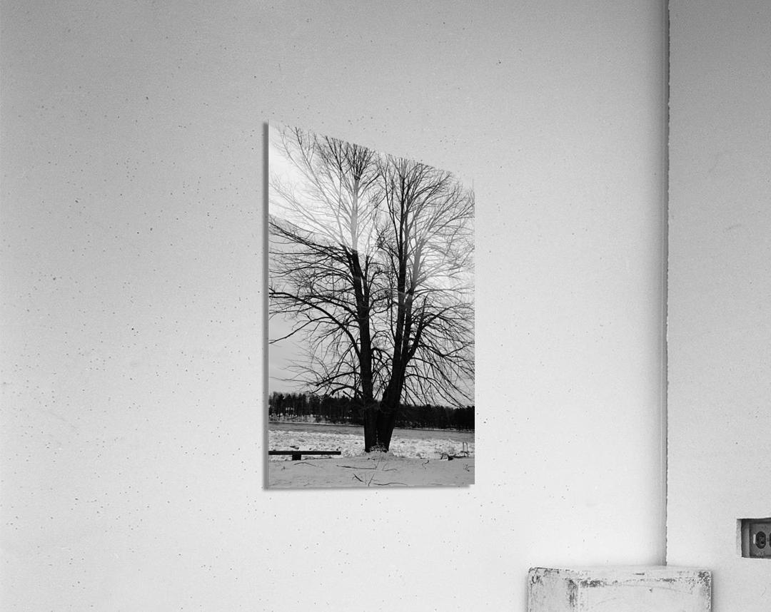 L'arbre de vie  Impression acrylique