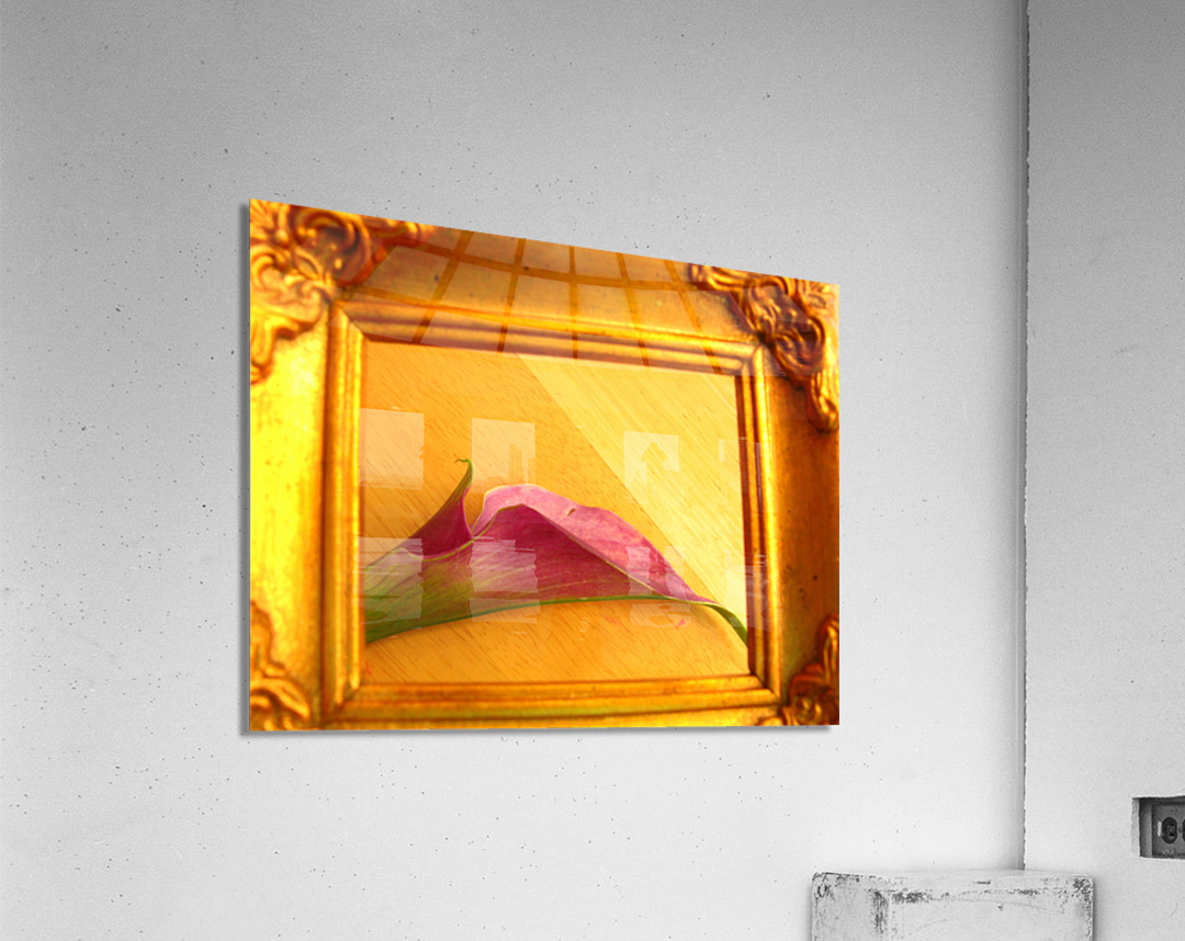 Gilded Lilly   Acrylic Print