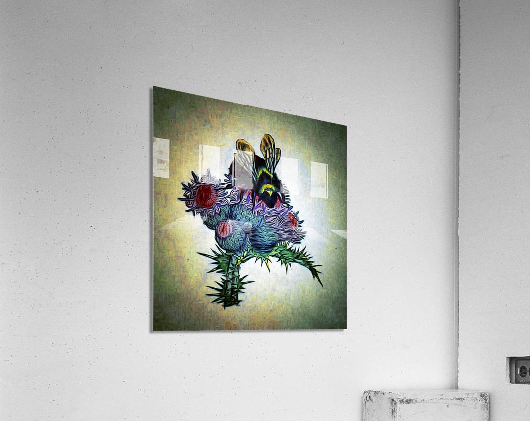 Bumble Bee On Thistle  Acrylic Print