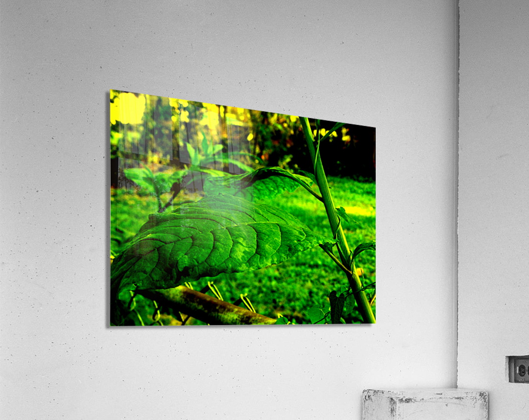 sofn EE42975E  Acrylic Print