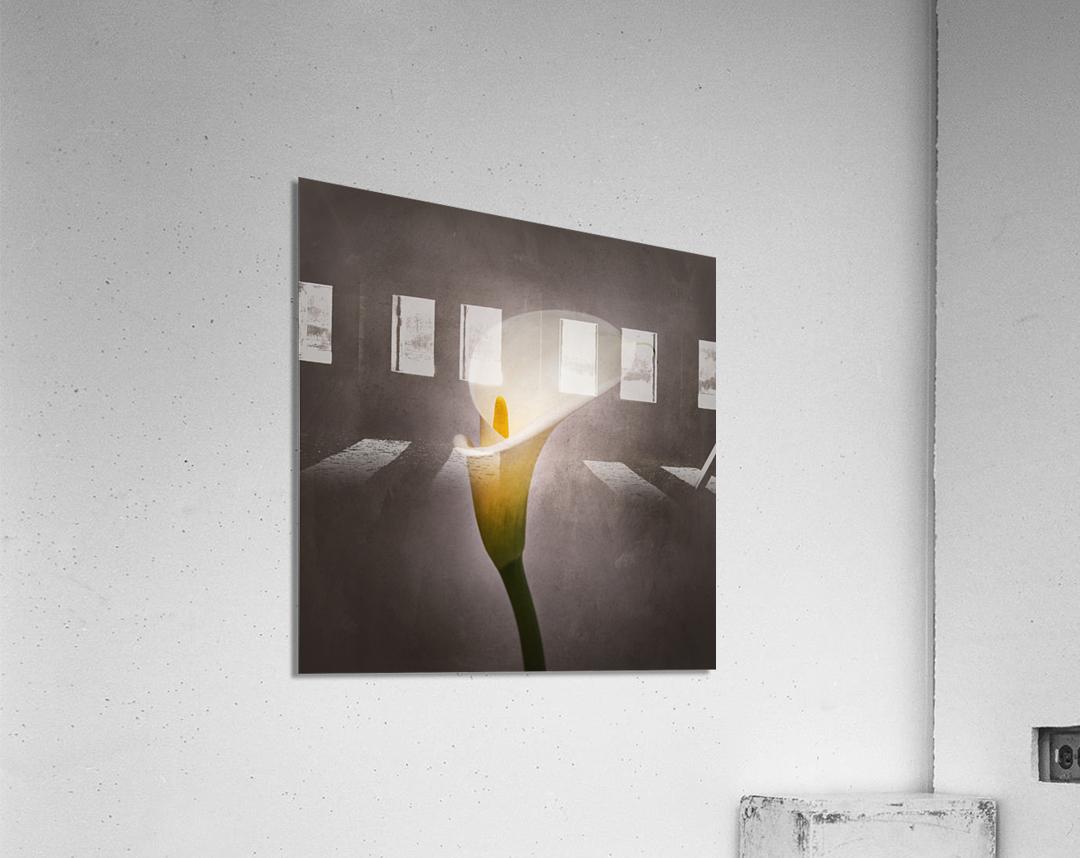 Graceful flower - Calla No. 4 | vintage style   Acrylic Print