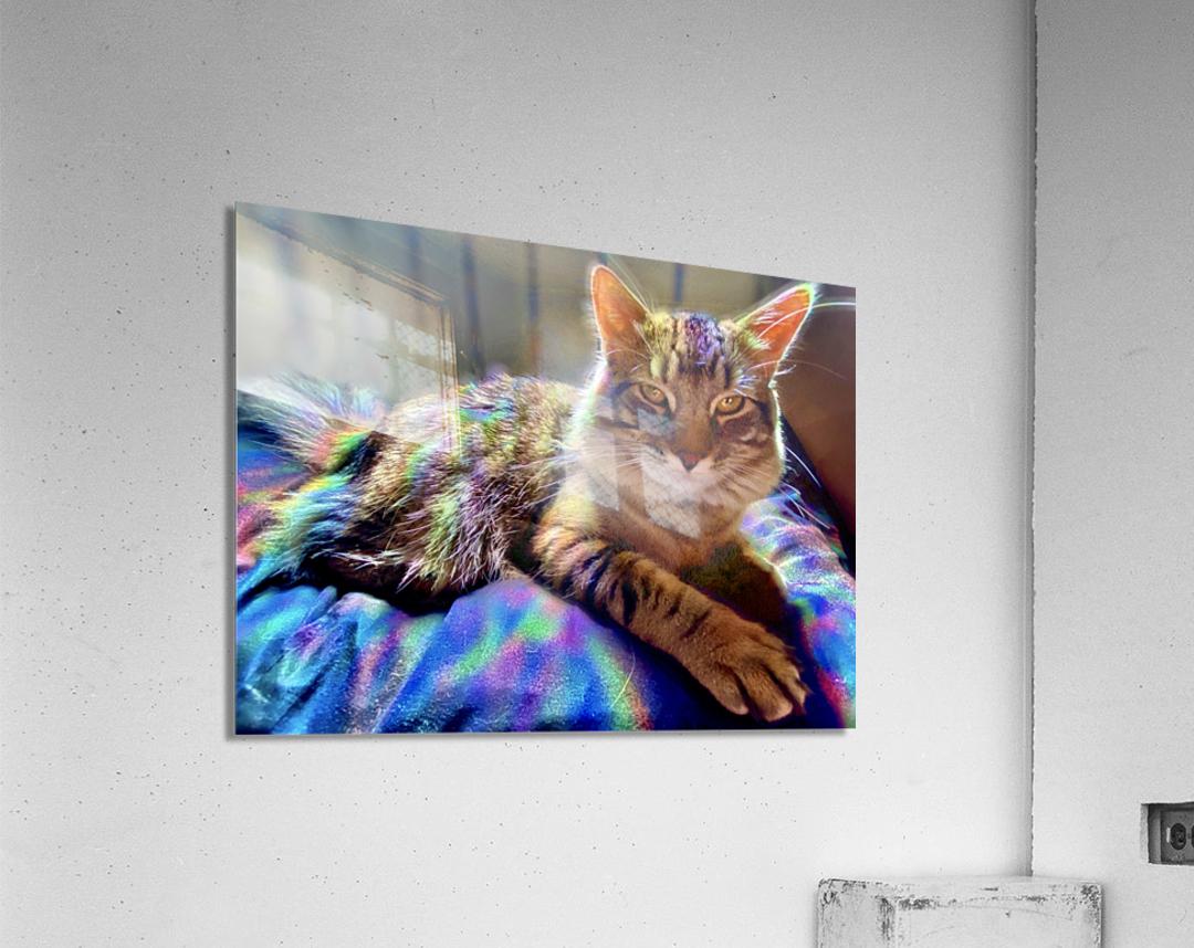 Rainbow Kitten Surprise   Acrylic Print