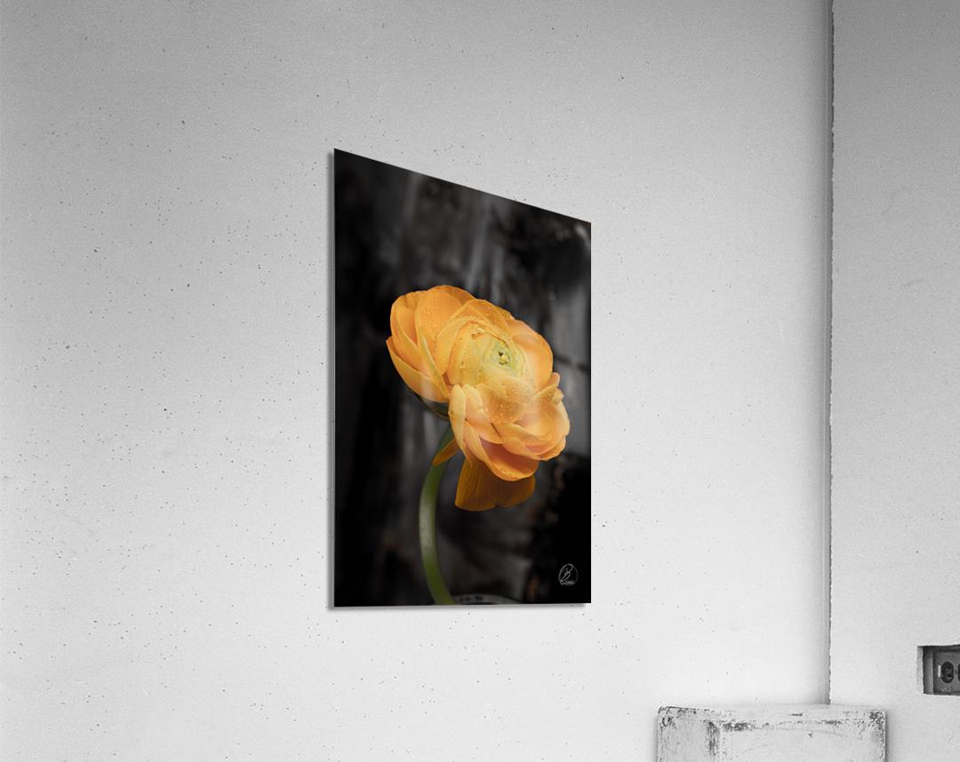 Unforgettable   Acrylic Print