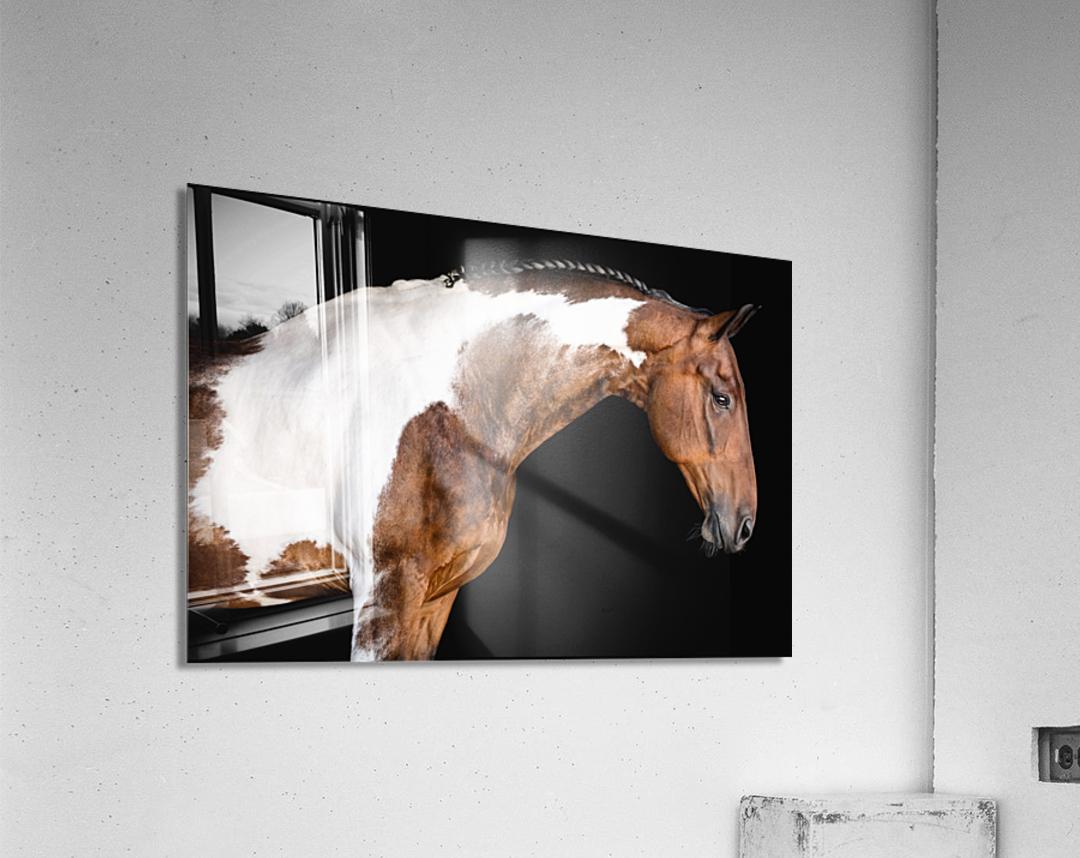 Paint Horse Portrait - Comanche  Acrylic Print