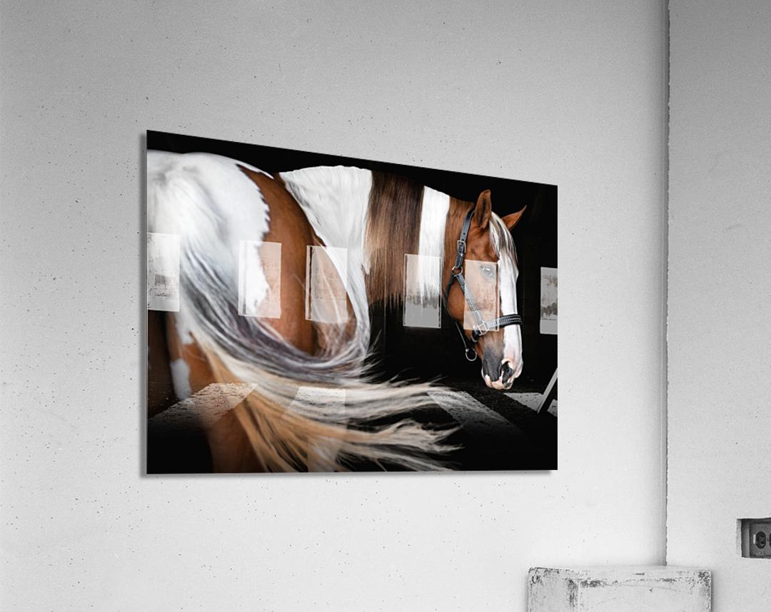 Paint Horse Portrait  Acrylic Print