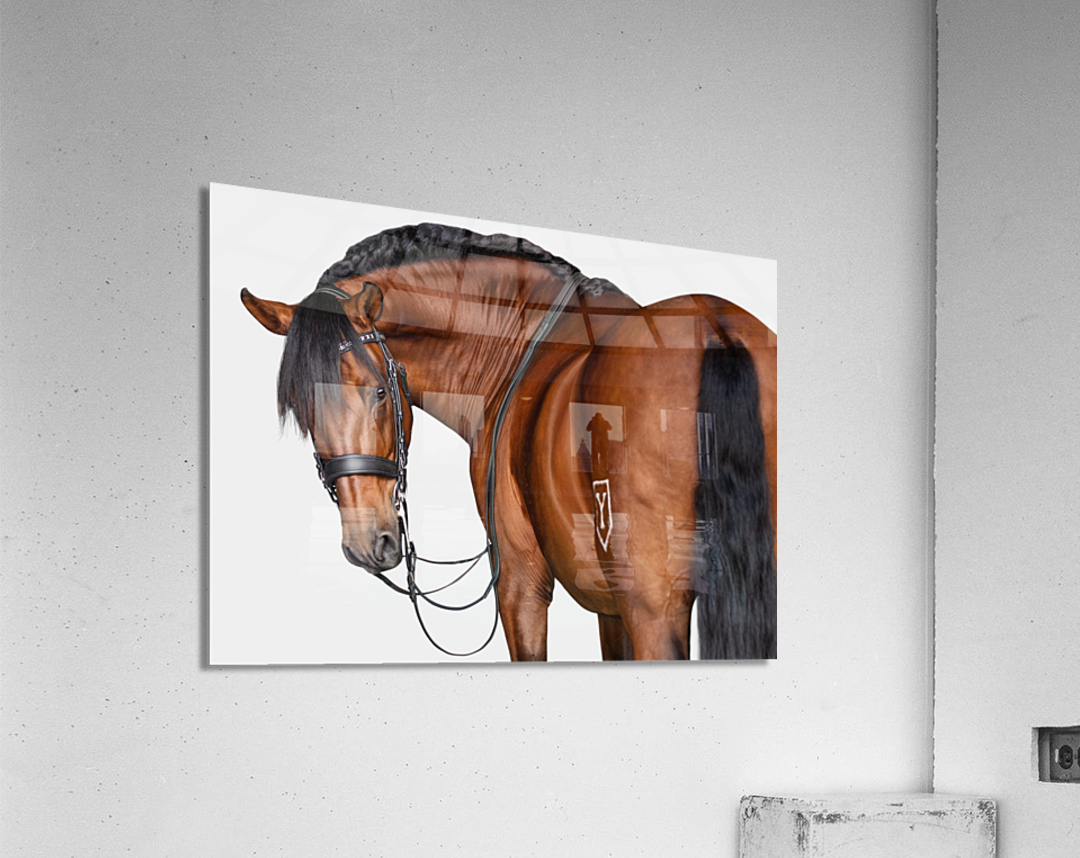 Bay Horse Portrait  Acrylic Print