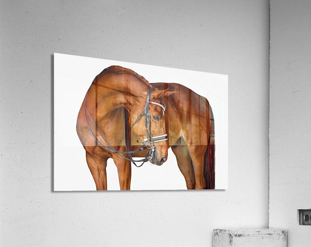 Chestnut Horse Portrait  Acrylic Print