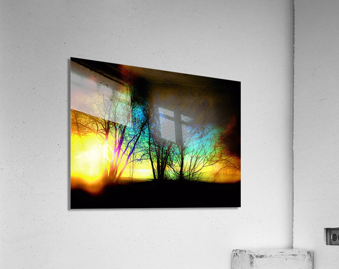 Evening tree  Acrylic Print