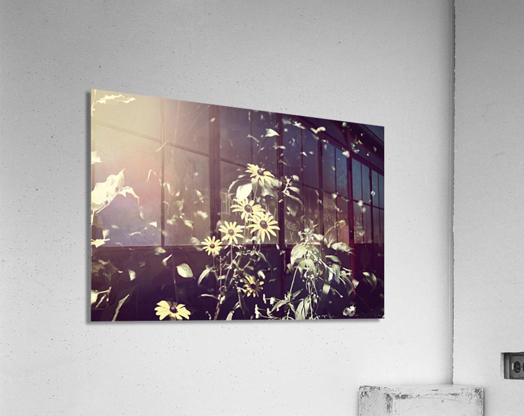 Shine On Me  Acrylic Print