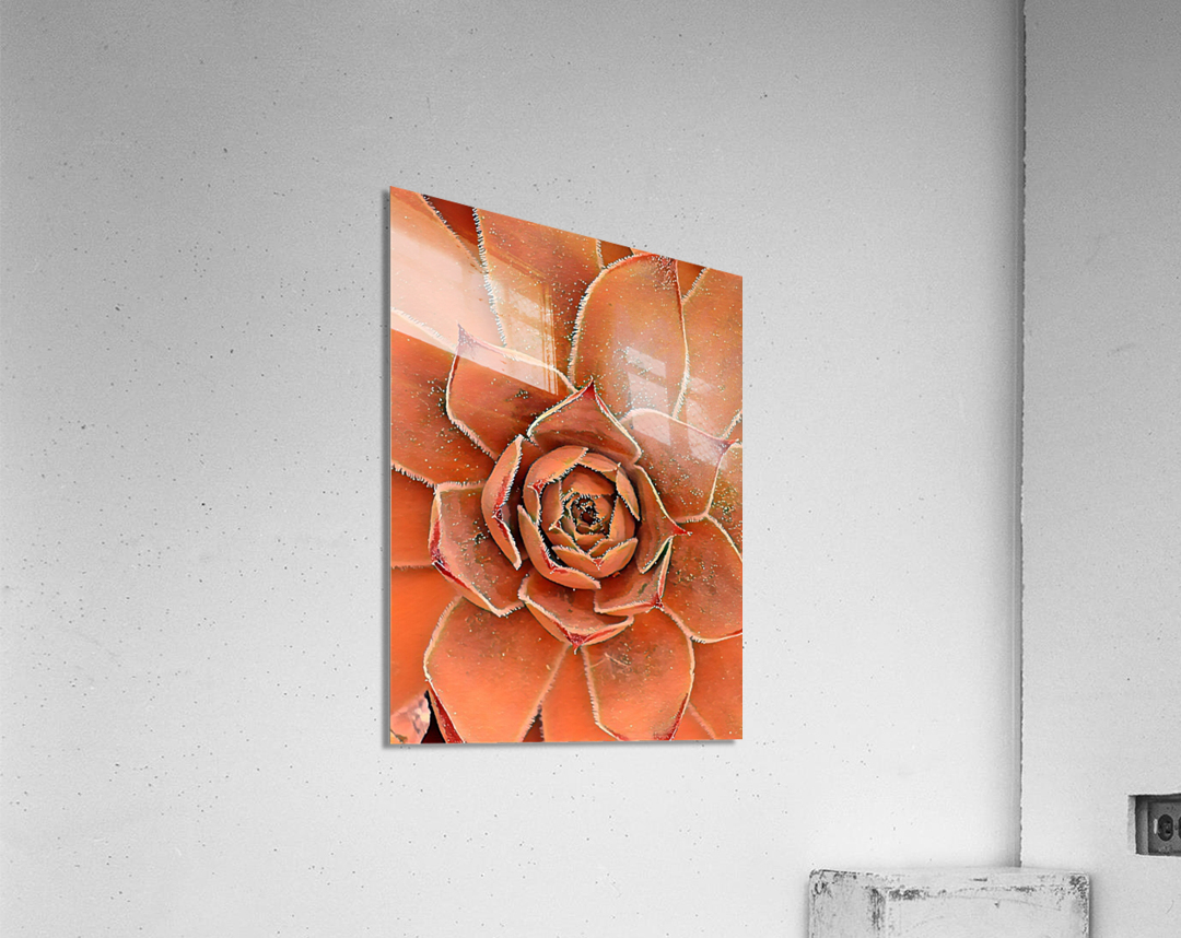 Spiral  Acrylic Print