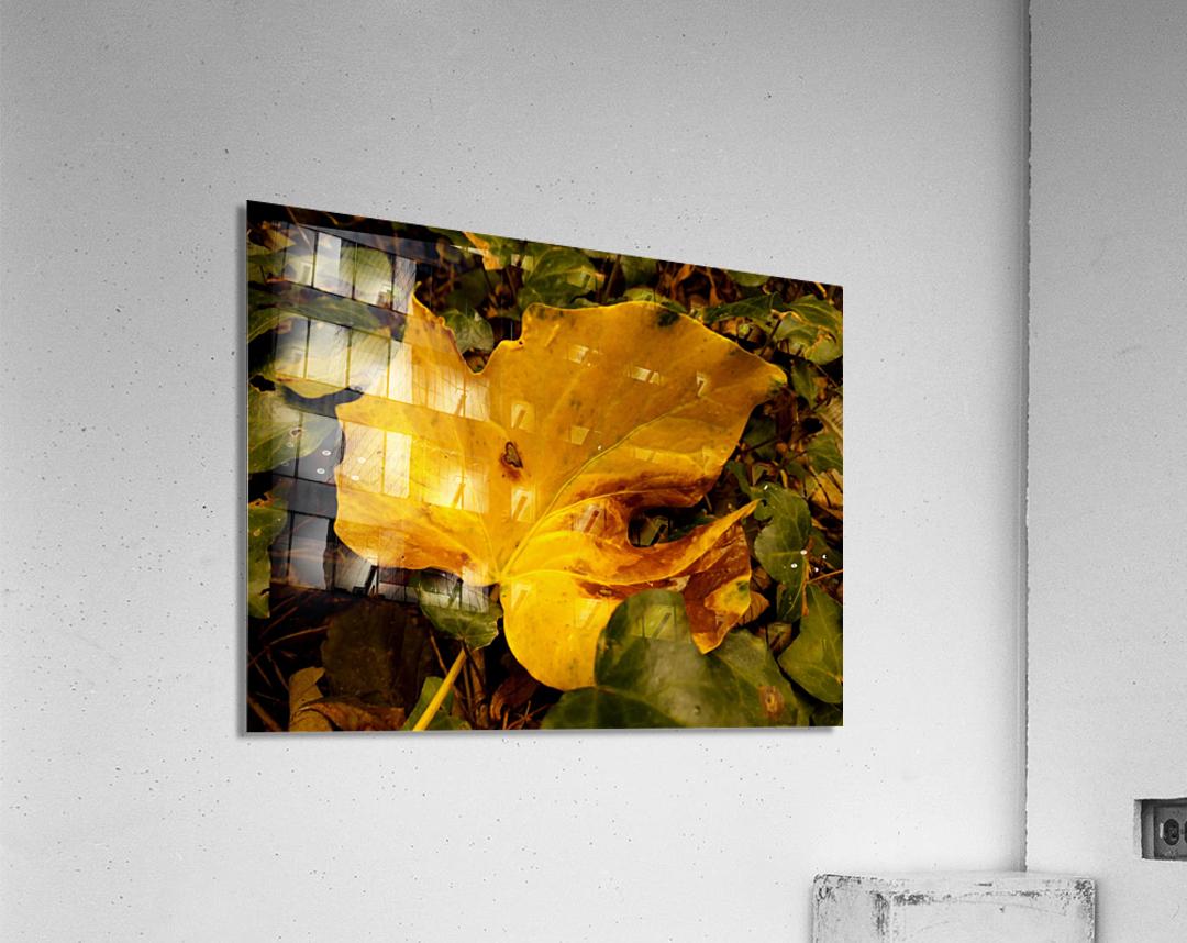 BEF07FDB 2FCF 424A 8A1F 5DBA1711F3B9  Acrylic Print