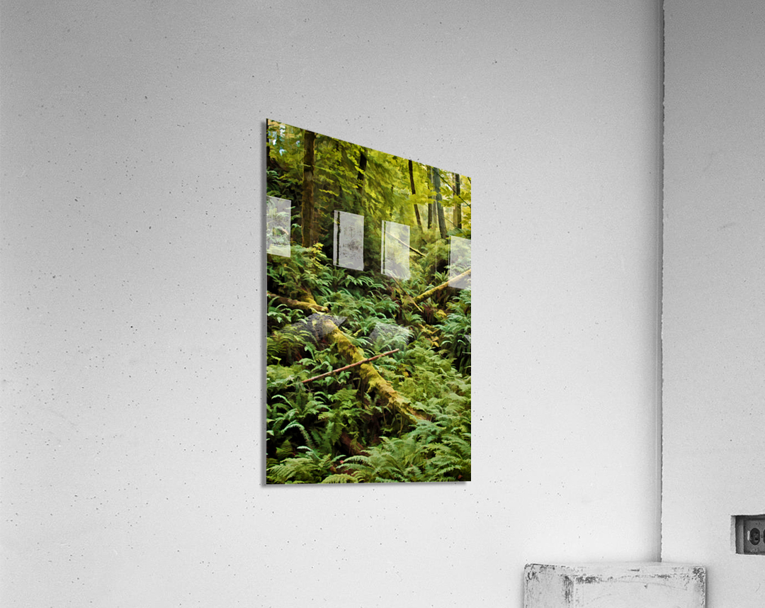 Fern Hollow  Acrylic Print