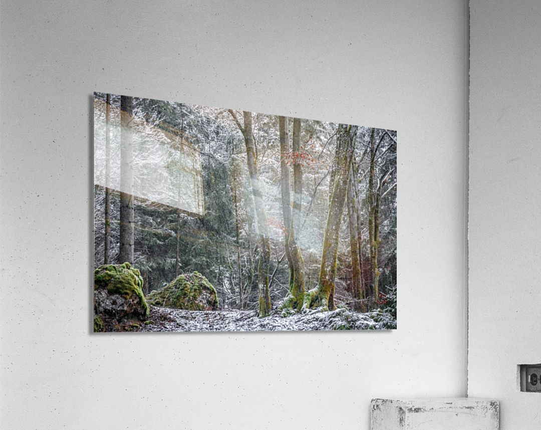 Winter forest  Acrylic Print