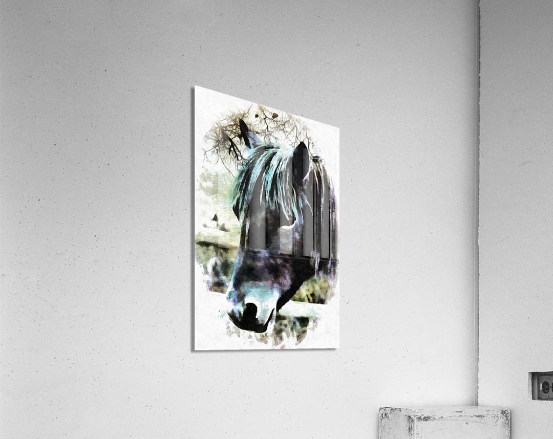 Horse Spirit Guide  Acrylic Print