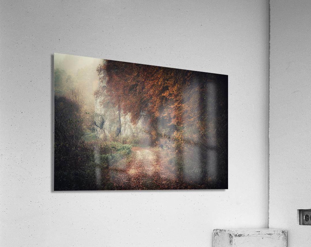 Foggy autumn forest  Acrylic Print