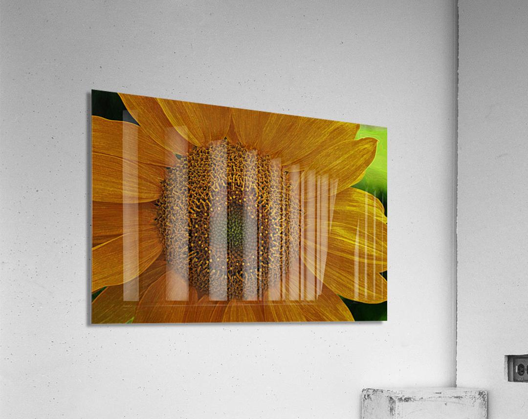 Enhanced Sunflower  Acrylic Print