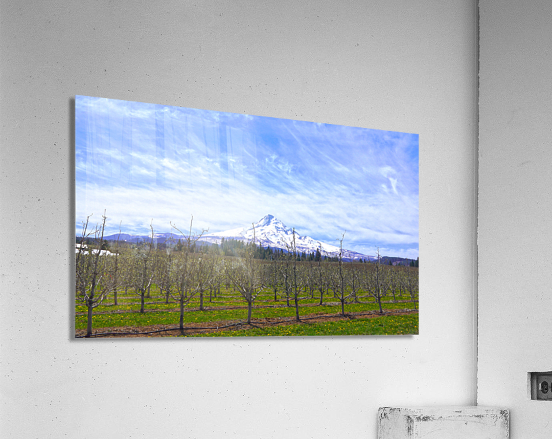 Spring at the Orchards  - Mount Hood - Oregon  Acrylic Print