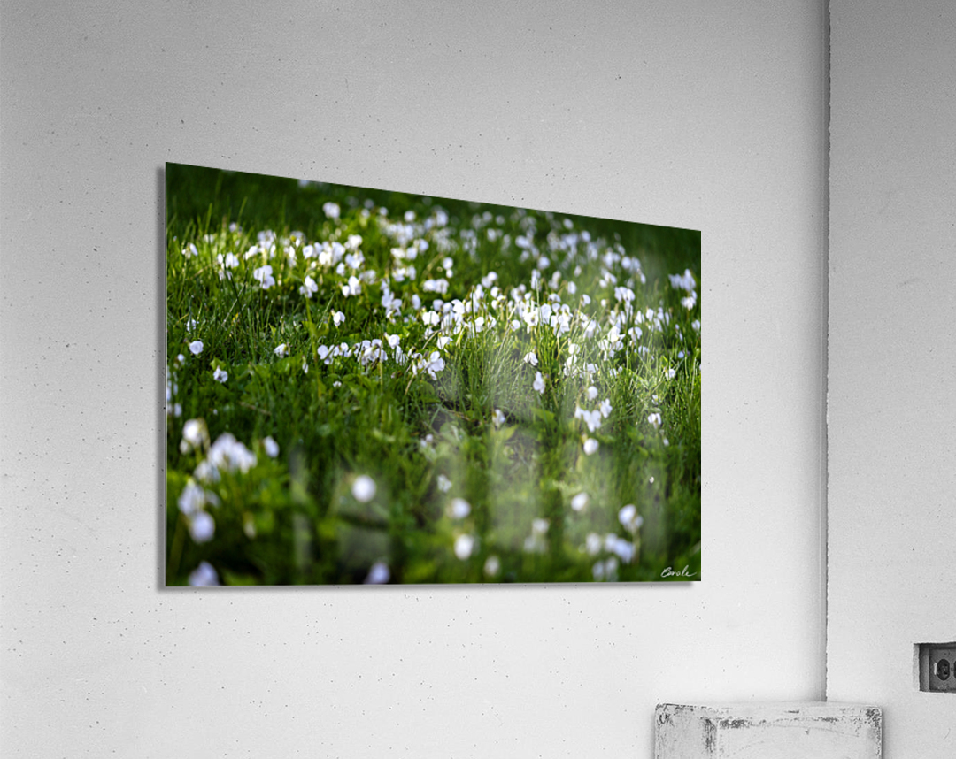 Confettis au jardin 3  Acrylic Print