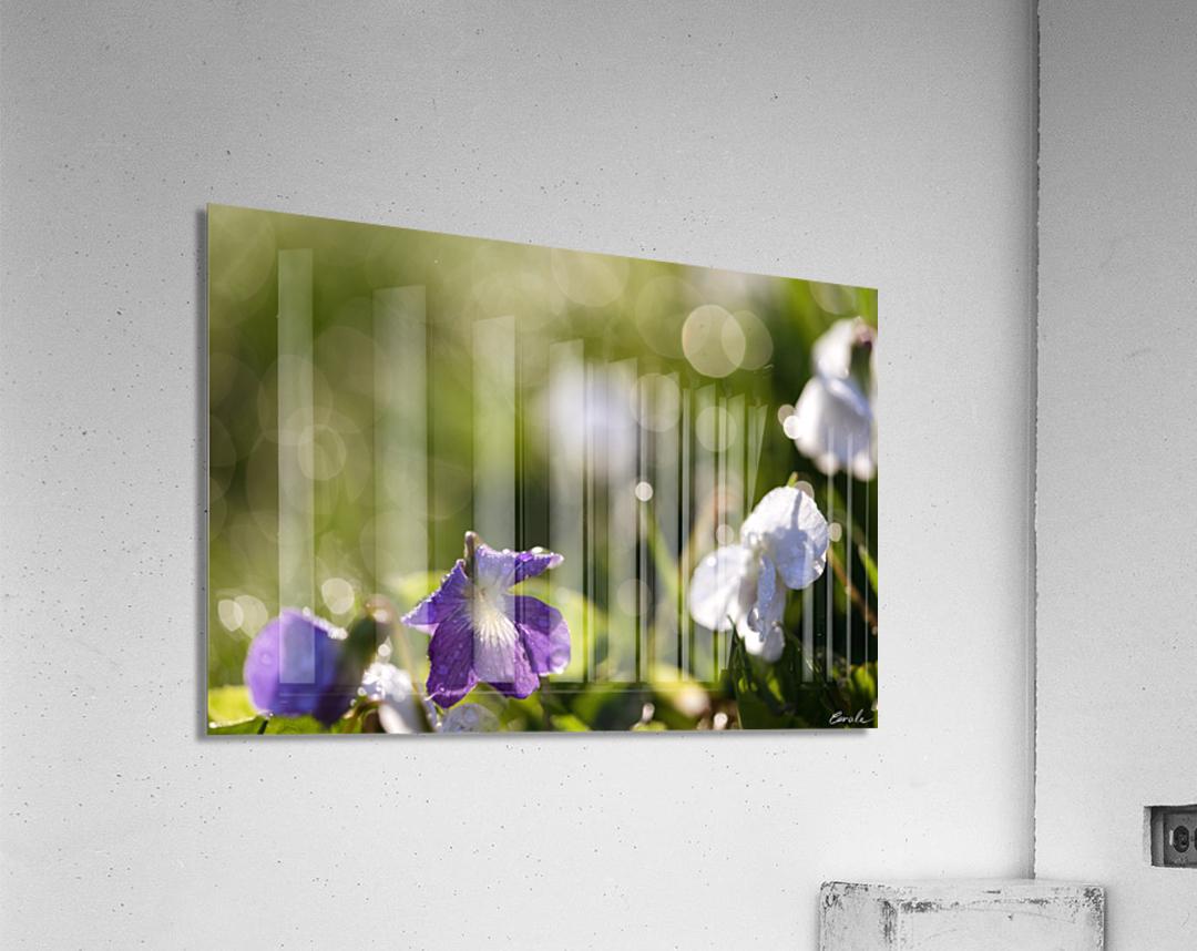 Confettis au jardin 4  Impression acrylique