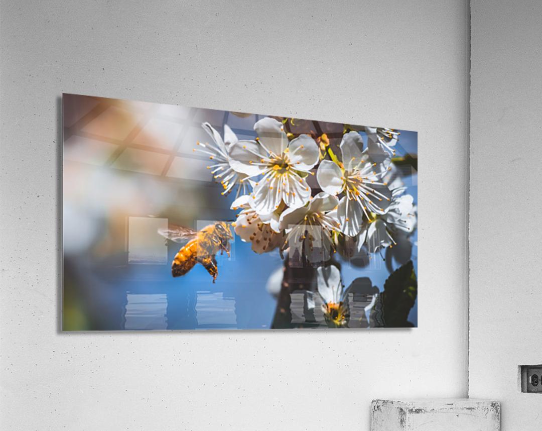 Blossom & The Bee  Acrylic Print