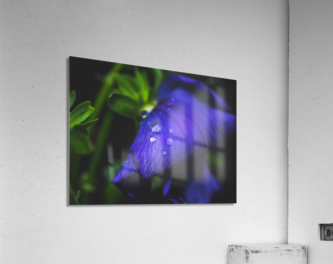 Drops With Blue  Acrylic Print