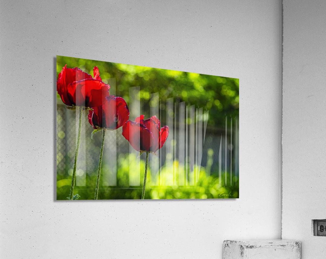 Trio Pavot  Impression acrylique