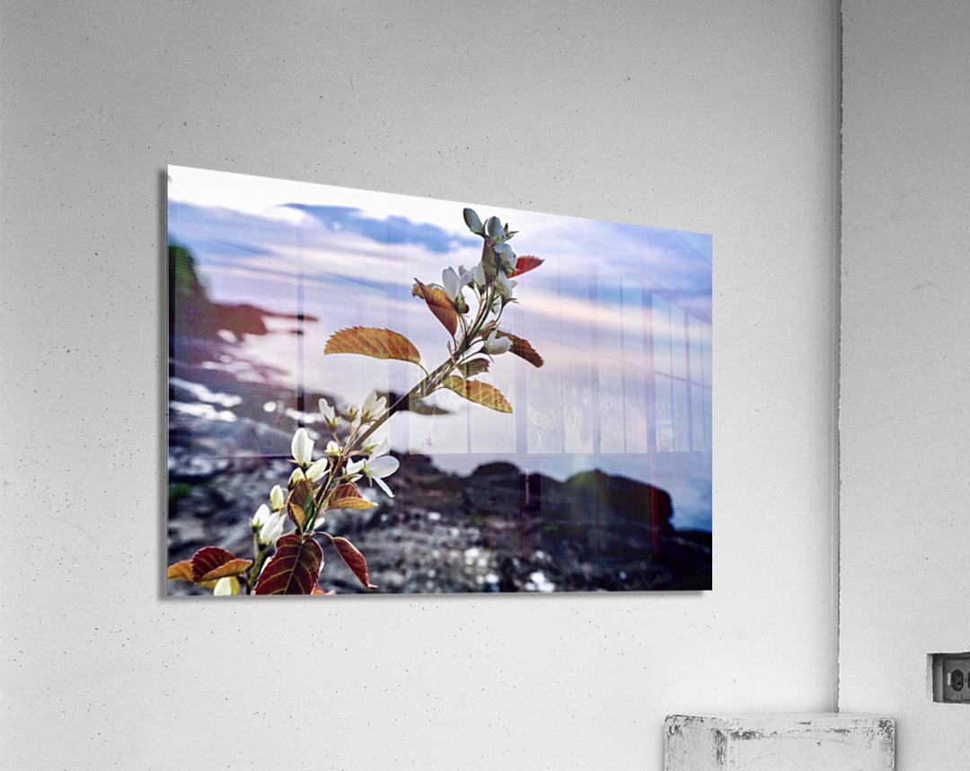 Flower on the Shoreline  Acrylic Print