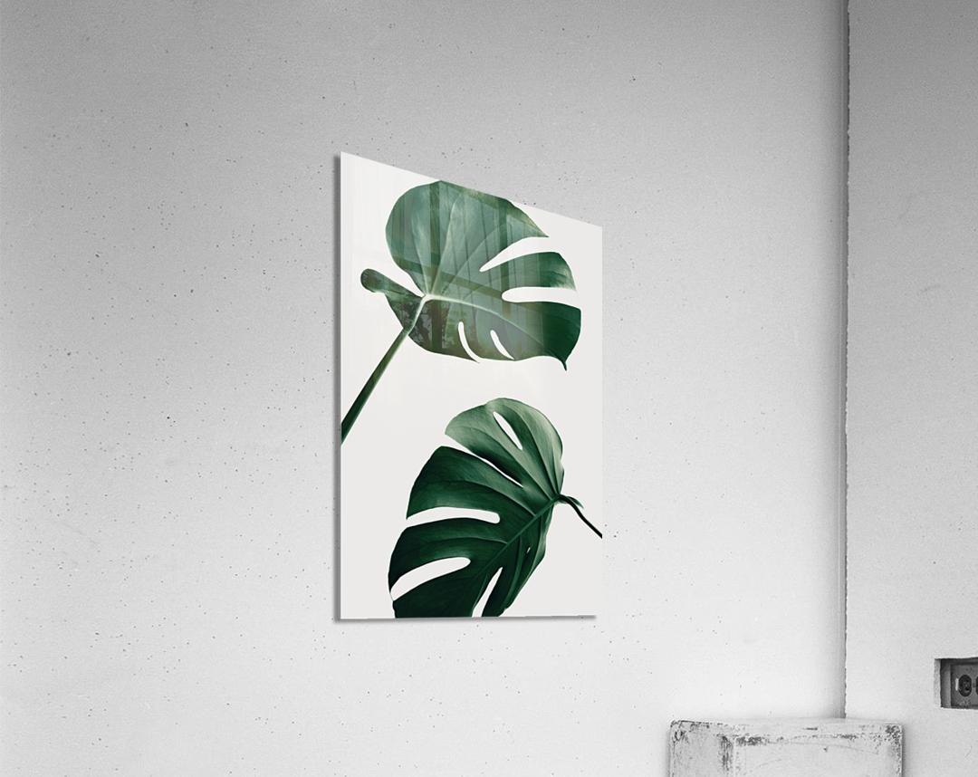 Monstera Natural 46  Acrylic Print