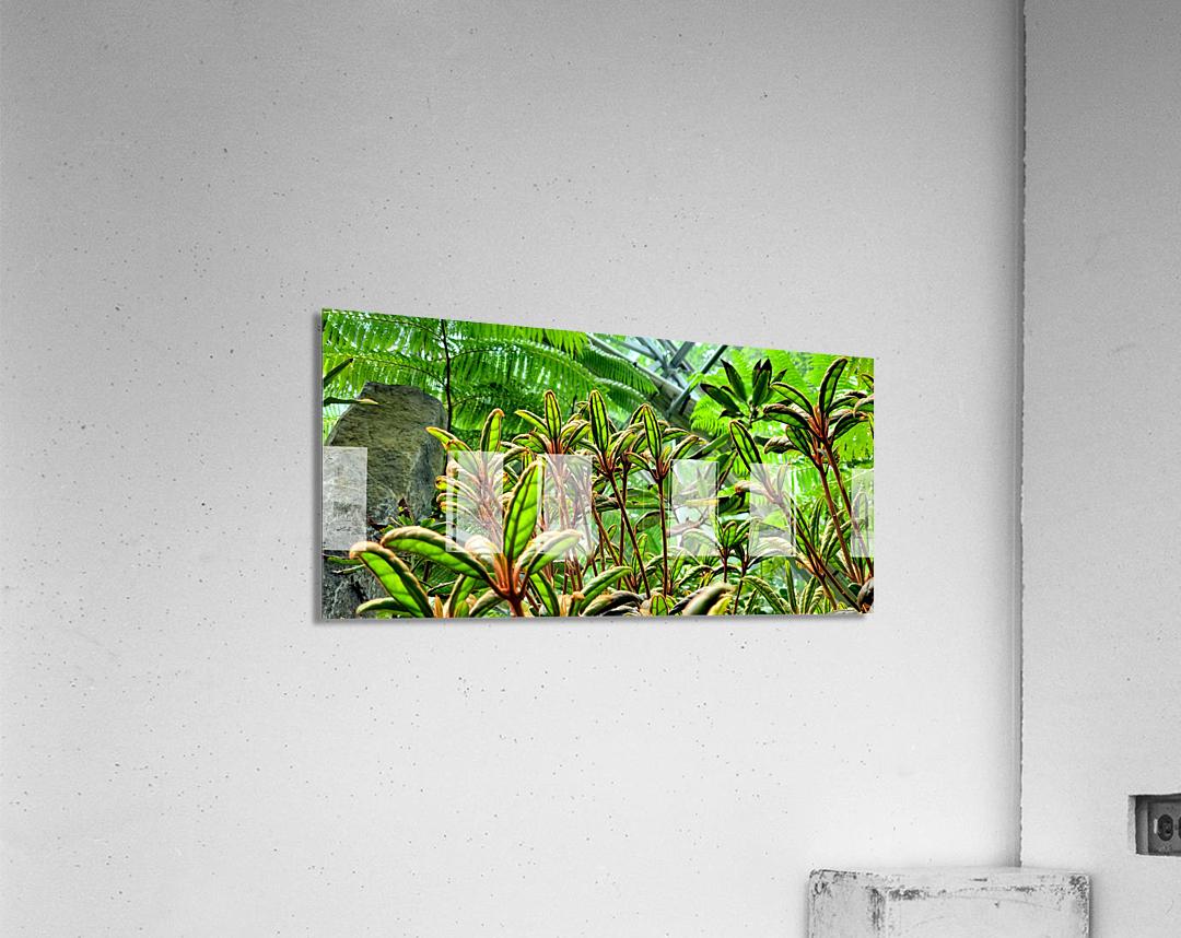 The Greenhouse  Acrylic Print