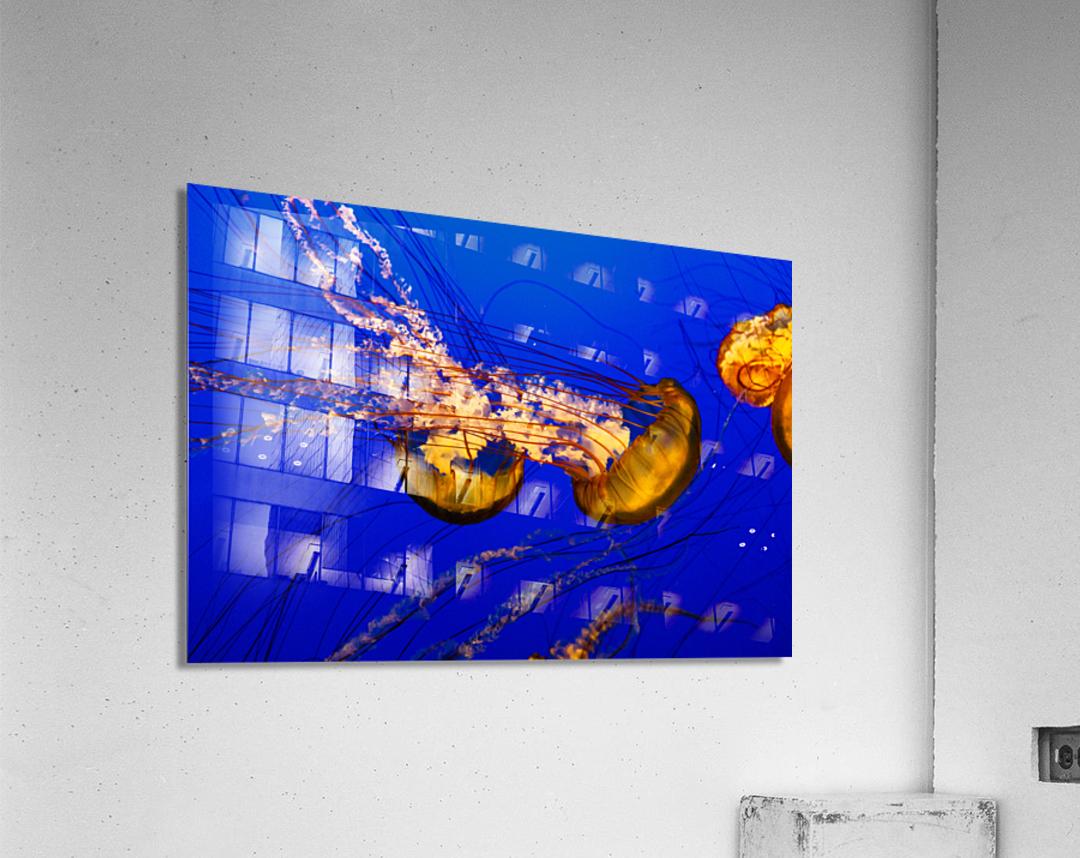 Monterey Jellyfish  Acrylic Print