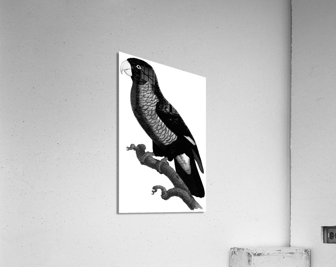 Yellow and Green Parrot Art Print Digital Download Vintage French Bird Illustration Printable Coastal Tropical Wall Art  Acrylic Print