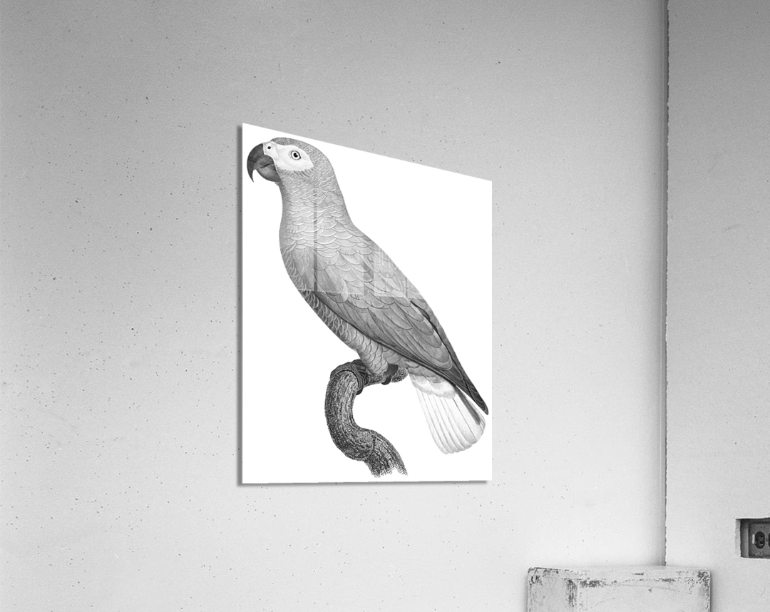 Parrot Print Art Poster with Parrot Parrot Wall Art for Bird Lovers  Acrylic Print