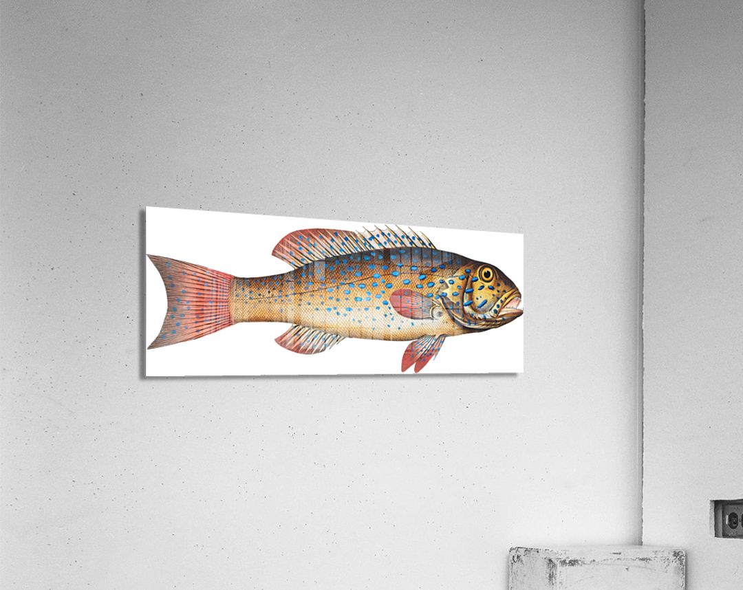 Vintage Fish Wall Art Prints   Acrylic Print