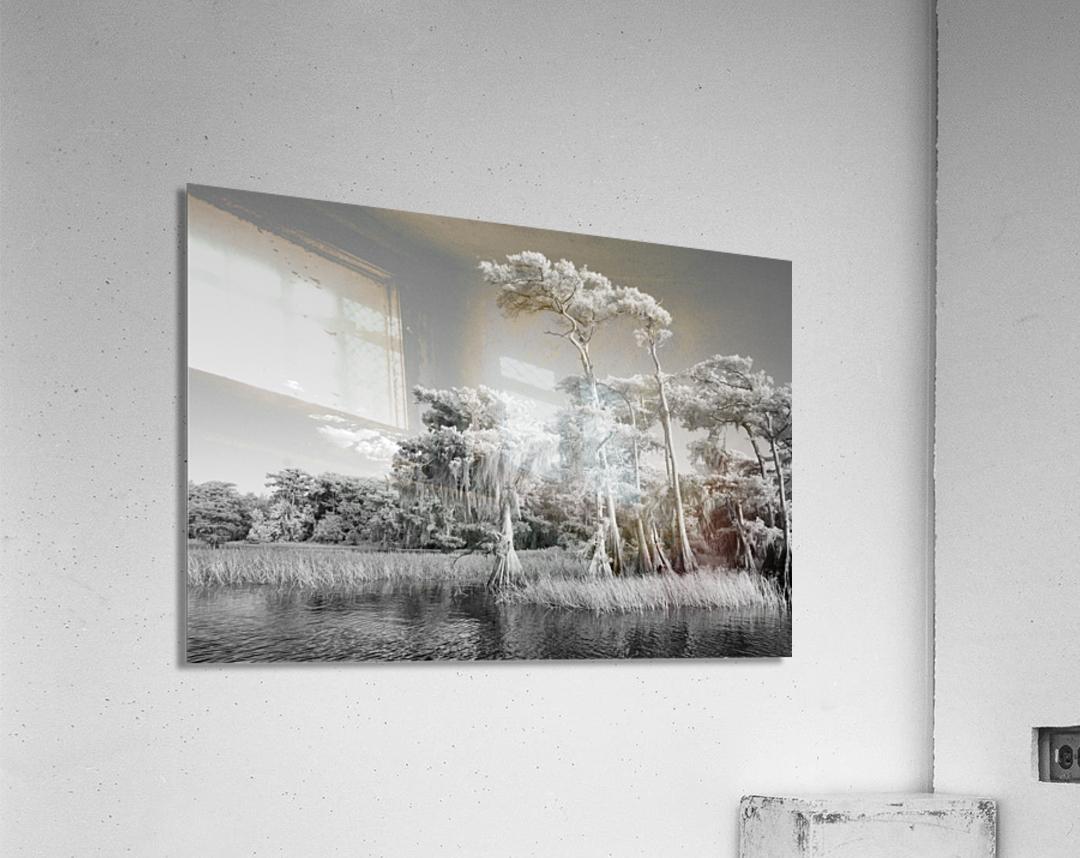 Blue cypress trees horizontal  Acrylic Print