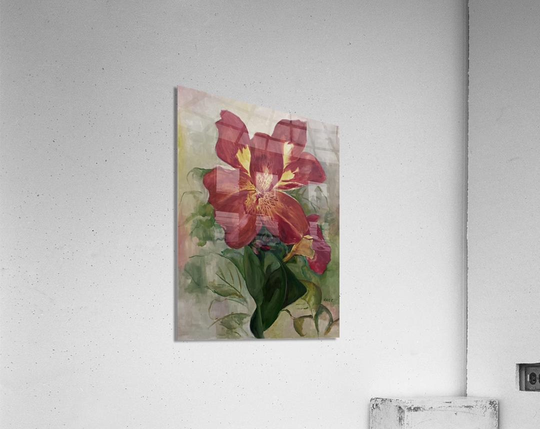Canna  Acrylic Print
