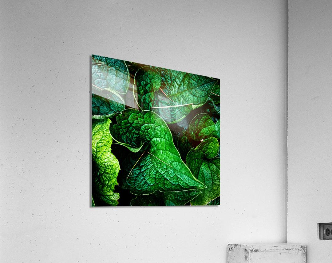 Garden Leaves  Acrylic Print