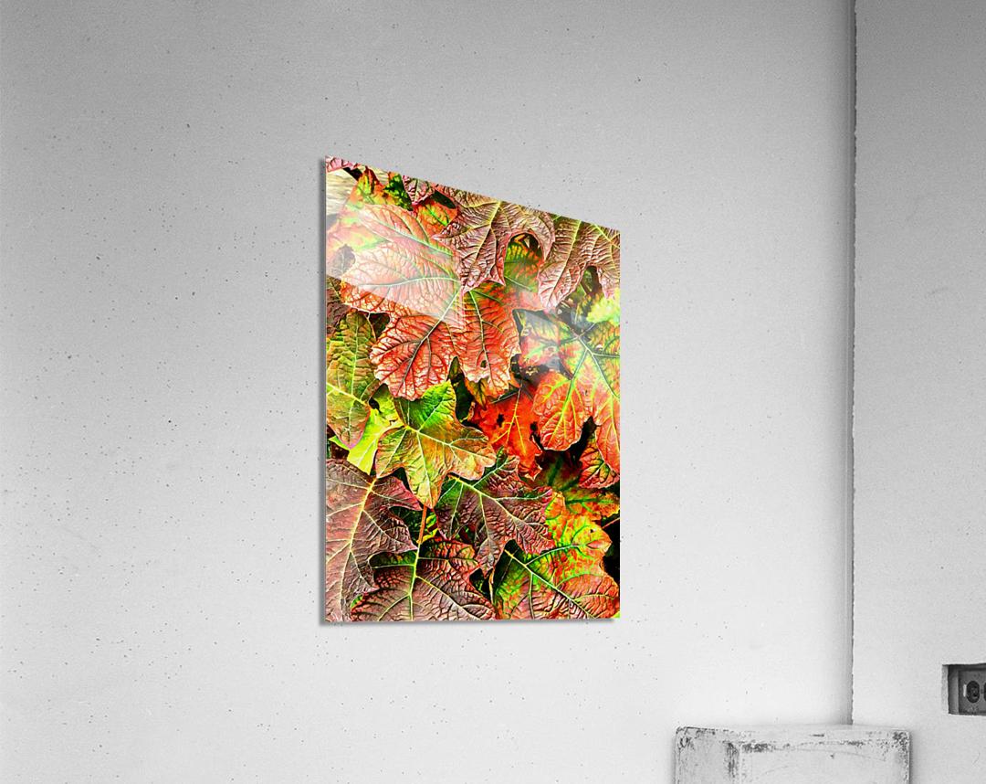 Oak Leaved Hydrangea In Autumn  Acrylic Print