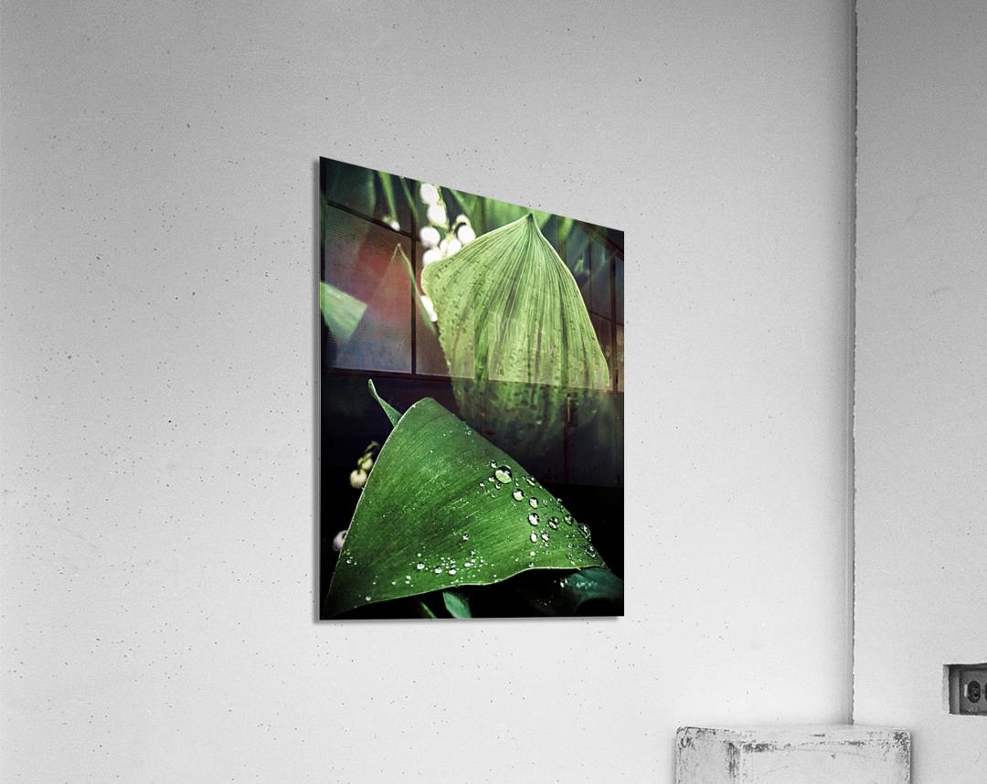 Dainty Drops  Acrylic Print