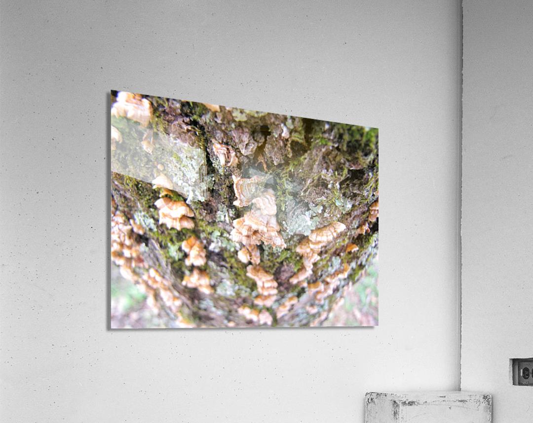 Nature  Impression acrylique