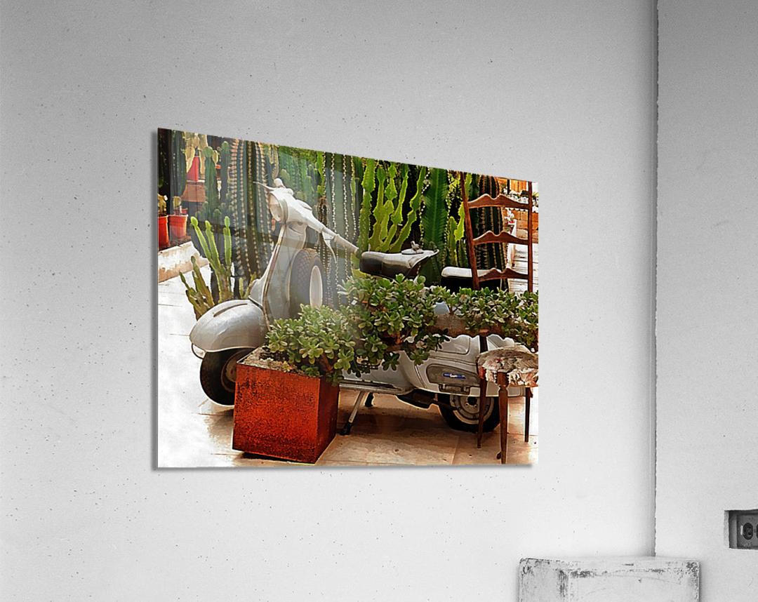 Vespa As Part Of Succulent Display  Acrylic Print