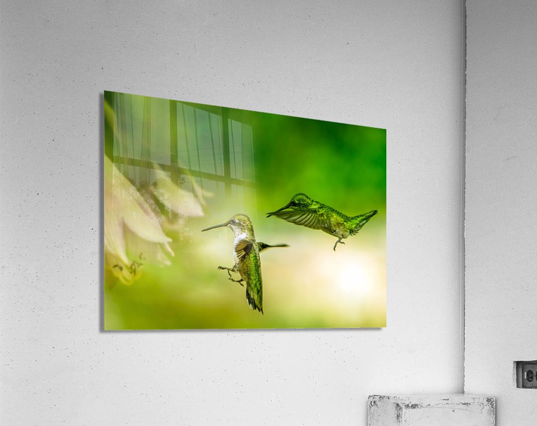 Emerald Hummingbirds  Acrylic Print