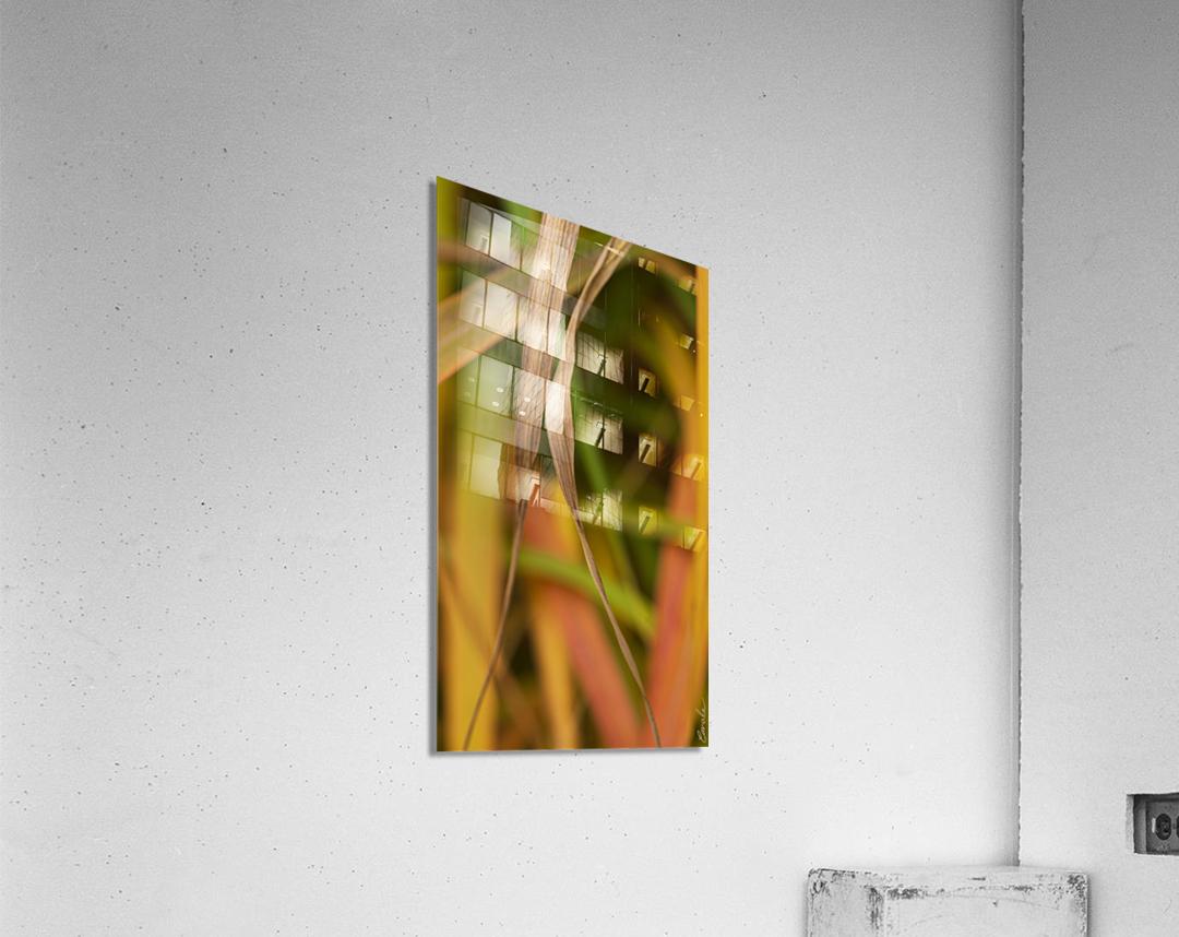 Flamboyantes Graminees no. 5 - Flamboyant Grasses no. 5  Impression acrylique